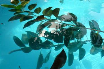 Pool Stillleben poolpics12 13 1 Finca Argayall (La Gomera)