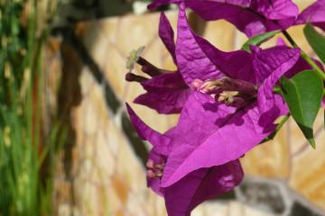 Guest view: Johannes Flowers johannes flowers 2013 07 Finca Argayall (La Gomera)