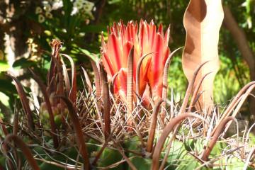 Guest view: Johannes Flowers johannes flowers 2013 15 Finca Argayall (La Gomera)