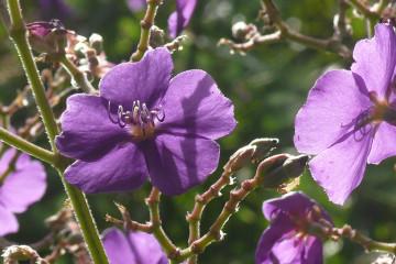 Guest view: Johannes Flowers johannes flowers 2013 17 Finca Argayall (La Gomera)