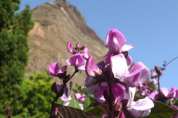 Guest view: Johannes Flowers johannes flowers 2013 18 Finca Argayall (La Gomera)