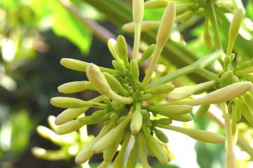 Guest view: Johannes Flowers johannes flowers 2013 19 Finca Argayall (La Gomera)