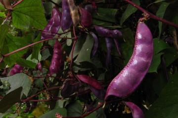 Finca impressions 2015 finca garden august 2012 069 Finca Argayall (La Gomera)