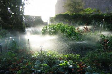 Finca impressions 2015 watering Finca Argayall (La Gomera)