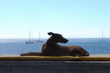 Galerie: Die besten Aussichten 2004 ocean nuschka Finca Argayall (La Gomera)
