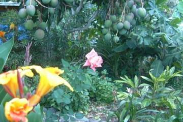 Galerie: Permakultur Vielfalt 2004 garden hiddenrose02 20031220 Finca Argayall (La Gomera)