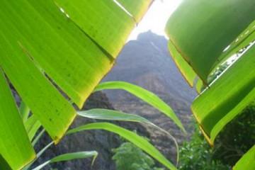 Galerie: Permakultur Vielfalt 2004 garden leaves2 20041002 Finca Argayall (La Gomera)