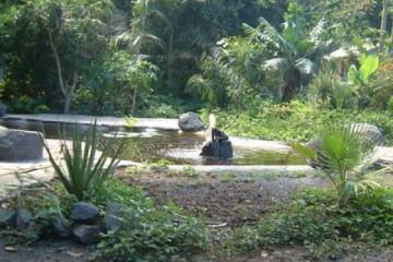 Galerie: Permakultur Vielfalt 2004 garden new pond 20040820 Finca Argayall (La Gomera)