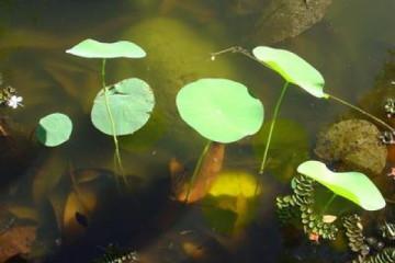 Galerie: Permakultur Vielfalt 2004 garden pond20041002 Finca Argayall (La Gomera)