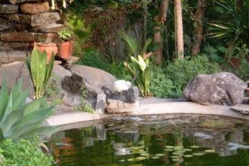 Galerie: Permakultur Vielfalt 2004 garden visitor01 20040902 Finca Argayall (La Gomera)