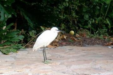 Galerie: Permakultur Vielfalt 2004 garden visitor02 20040902 Finca Argayall (La Gomera)