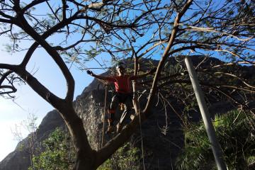 Galerie: Covid Zeiten treecutting 1800x1200jpg Finca Argayall (La Gomera)