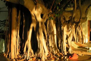 Galerie: Einblicke impressionen 2007 0004 Finca Argayall (La Gomera)