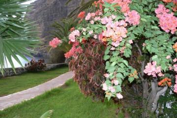 Gallery: Impressions 2007 impressionen 2007 2 0054 Finca Argayall (La Gomera)